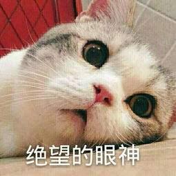 �^望的眼神